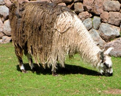 Cuzco School of Art  Travel Well, Fly Safe