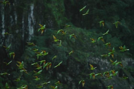 parakeets IMG_0958