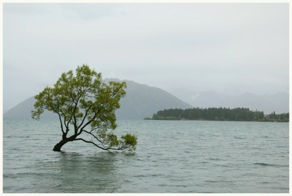 0922_the_wanaka_tree_border